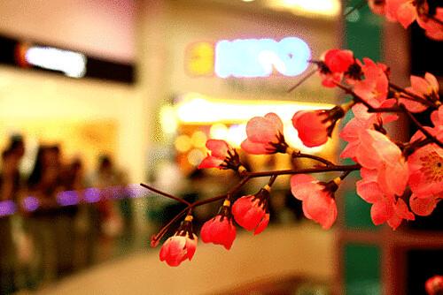 bunga-mei-hwa