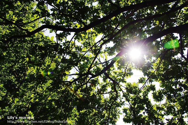 我們躺在草地上,透過樹蔭曬太陽,陽光照在我們身上暖暖的。這一個夏天的早晨,我不會忘記。
