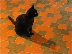 Bruges : Black Cat house- De Zwarte kat - 4/5