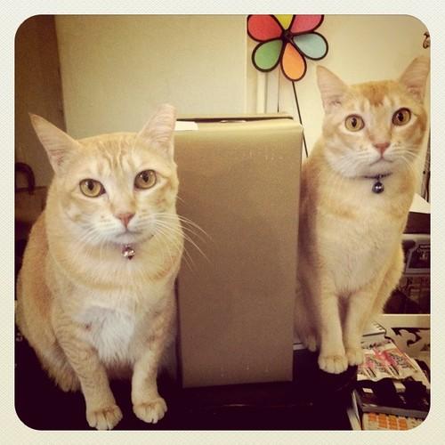 Estee & Jack & Melissa box
