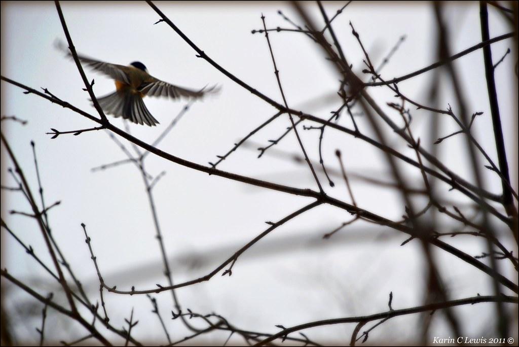 fly away chickadee