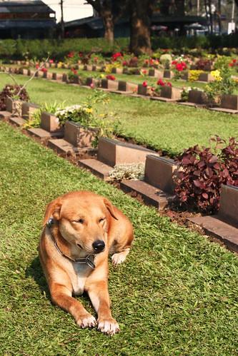Dog, graveyard