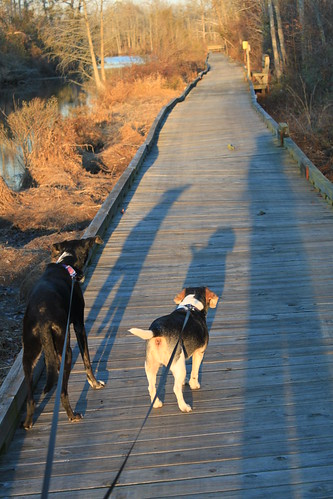 Fenwick Hollowell Wetlands - Jimmie, Henry, Vicky Shadows