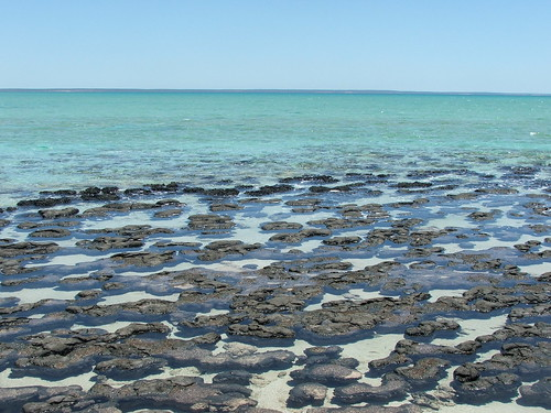 Picture from Hamelin Pool, Australia