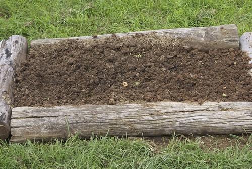 Bed #3 - initial plantings