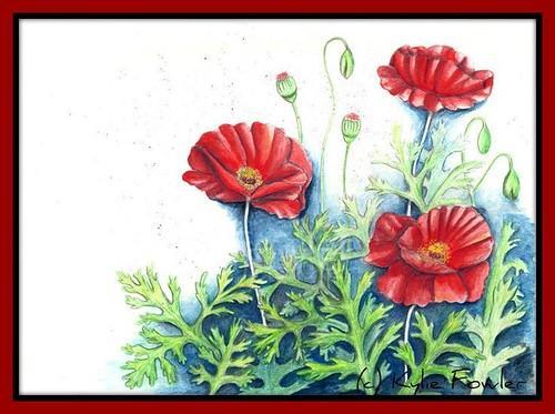 Poppies by Blissful Pumpkin