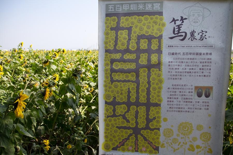 20110205_11_sunflower_01
