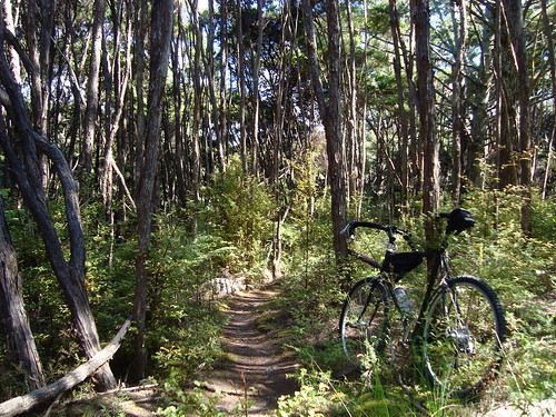 Royal Albany Singletrack
