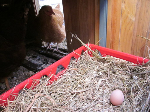 Our first egg!!!