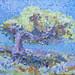 Holm Oak, Ikaria by Paul  Lewis
