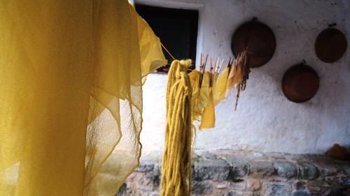 i gialli alaterno