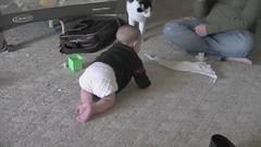 Crawling!