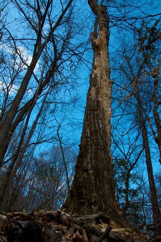 Termite/Tree