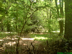 Highgate Wood, Hottest day of the year, April 2011