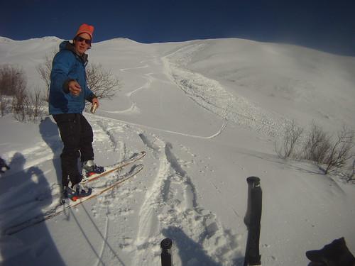 alaska skiing dog avalanche