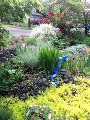 Front Garden - Understanding Climate Zones