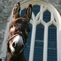 DONKEYS PUT THEIR BEST FOOT FORWARD FOR PALM SUNDAY SERVICES