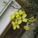 Kale flowers!