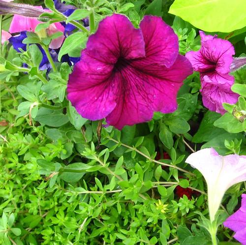 2011_06_20 - flowers 009