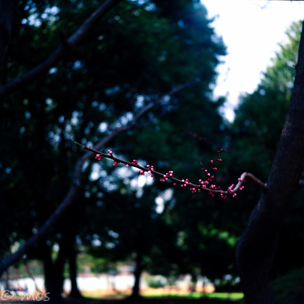 pink. (1/2)