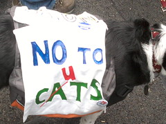No to cats/cuts