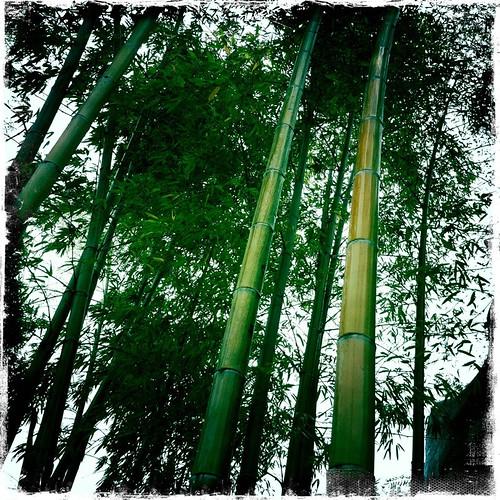 Be like bamboo my friend