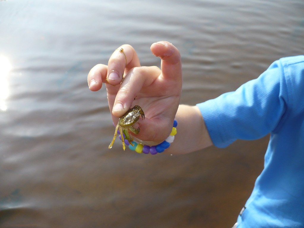 a captured crab