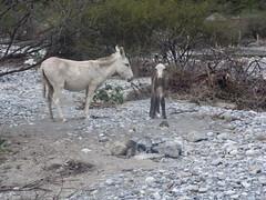 Huasteca Canyon, Nuevo Leon