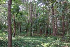 久田緑地―北地区(Kuden Ryokuchi, Kanagawa, Japan)