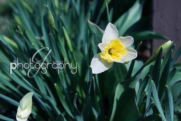 Mar222011_0007 copy