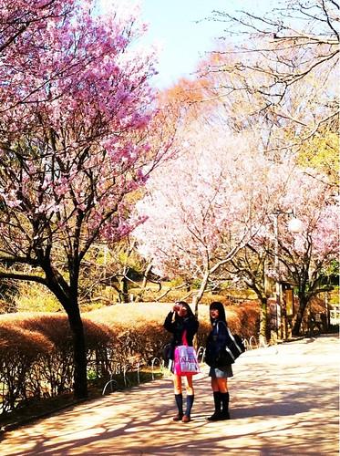 桜と大学生、Sakura & Schoolgirls