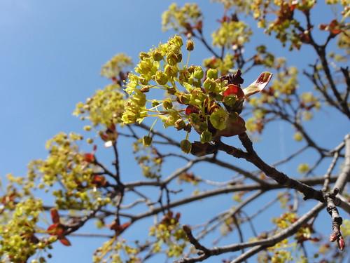 022/365 Spring