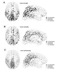 Amazon.com: Networks of the Brain (9780262014694): Olaf Sporns: Books