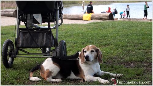 A Dog at the Park