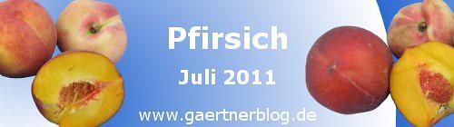 Garten-Koch-Event Juli 2011: Pfirsich [31.07.2011]