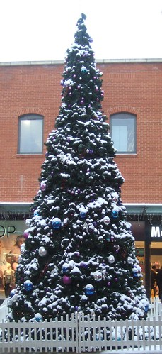 Fremlin Walk - Snow Dusted Christmas Tree