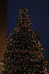 Greenville Christmas Tree