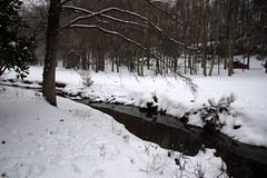 Brushy Creek in Snow