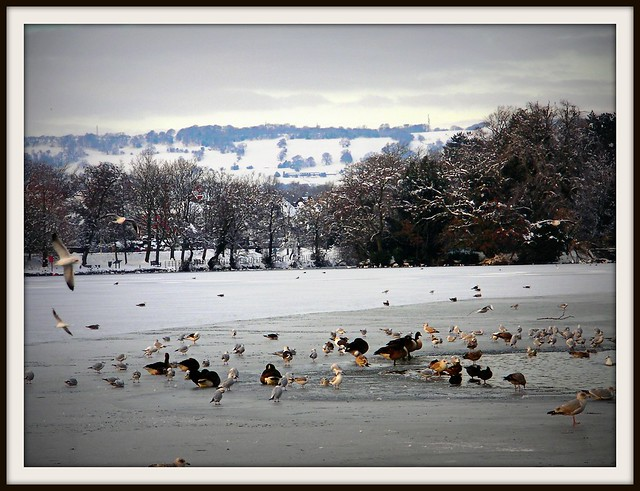 Snowy and frozen Roath Park Lake, Cardiff