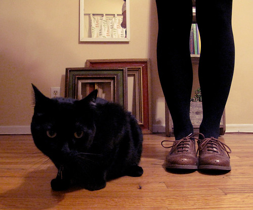 neko & new shoes