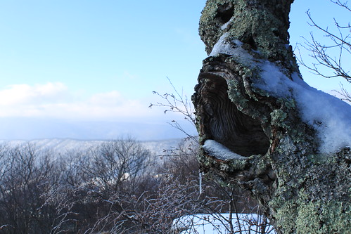 Kelly's Knob - Tree Hole and Ridgeline