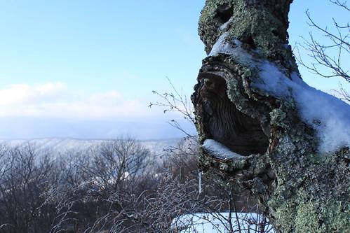 Kelly's Knob - Tree Hole and Ridgeline