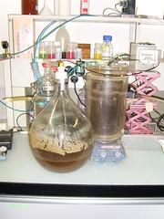 Nitrification of urine