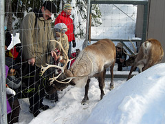 these are Santa's Reindeer.. but they still do...