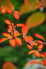 DeLIGHTful Autumn Colour at Sheffield Park & G...
