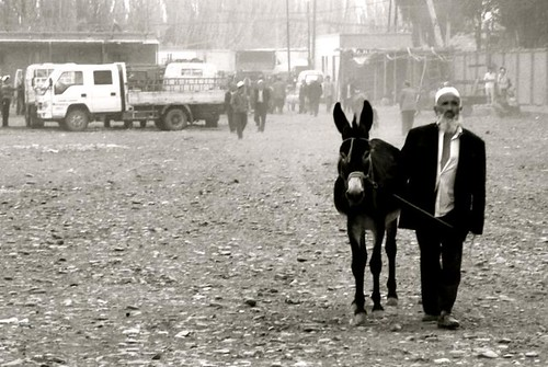 old man and donkey
