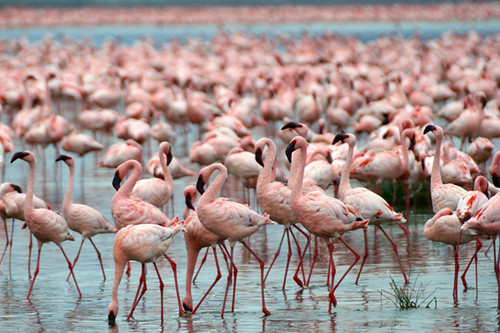 Flamingos Lake Nakuru by Tobi backpacking Africa