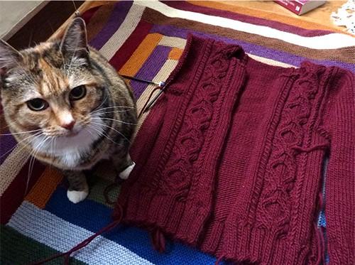 knitcat2
