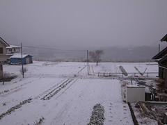 雪が降ってる