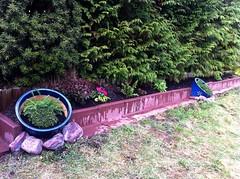 Garten Eindrücke